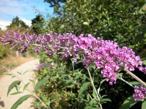 Fleurs Arbustes Arbres Et Les Insectes Qui Leur Sont Associes Rencontres Lors