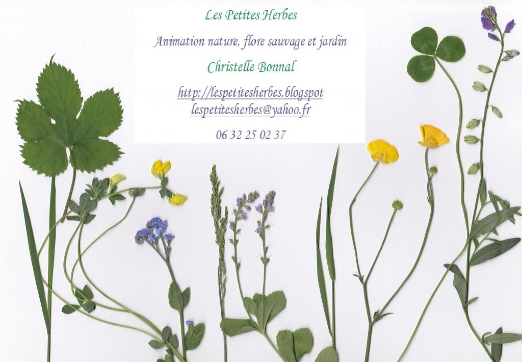 Les Petites Herbes continuent sur un nouveau blog! carte-de-visite
