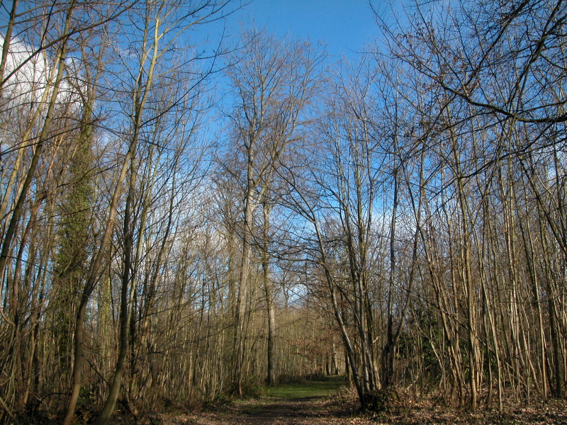 Prochaine sortie botanique le 7 avril 2013 dans le Domaine national de Saint-Cloud dans botanique les-petites-herbes-domaine-national-de-saint-cloud