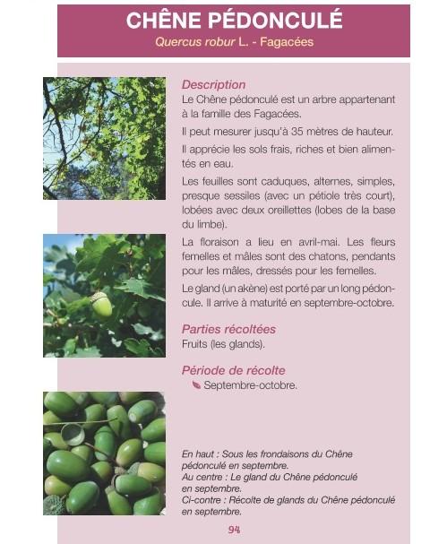 Les Petites Herbes  Christelle Bonnal 45 plantes sauvages à récolter et déguster (3)